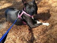Duchess's story This adorable girl has the sweetest,