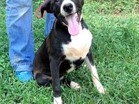 Duckie's story Duckie is a female black-and-white lab