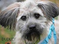 Dudley - adoption pending's story Dudley, 2