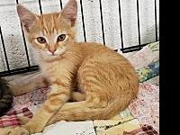 Dudley's story Sullivan County Animal Shelter  380