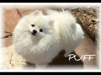 Reserve Yours now! A Bouncy New puppy would make a