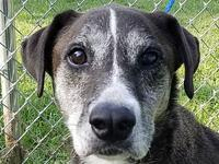 Duff *FOSTER NEEDED*'s story Meet Duff, a 7 year old,