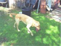 1 1/2 yr old AKC Golden Lab with papers. Looking for a