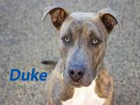 DUKE's story LET`S PLAY IN THE SNOW! Favorite Things: