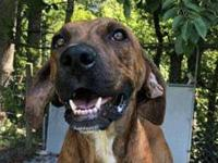 Duke *FOSTER NEEDED*'s story Meet Duke, a 2 year old,