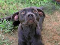 DUKE's story /This animal was surrendered to the