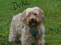 Duke's story Duke is a shy yet loving fur baby in