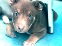 Adoption fee is $150, this puppies estimated DOB is
