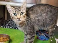DULCE's story Dulce is a beautiful 2 year old domestic