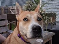 Dulce's story FOSTERED IN: Elgin, IL 60124 AGE: 4 Years