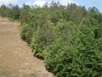 43 acres, more or less, timber/hunting tract located on