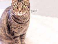 Dumpling's story I am a super sweet, loving and