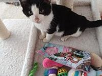 Duncan's story Duncan is an amazing playful kitten that