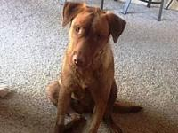 Duncan's story Duncan is a sweet doggie. He is a lab