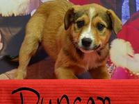 My story Duncan is looking for a forever home where he