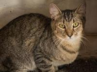 My story Duncan is a gentle tabby cat who enjoys