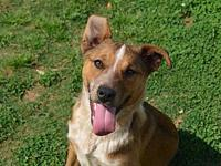 Dundee's story Dundee is a red heeler mix,