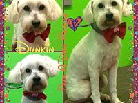 Dunkin's story Dunkin is an extraordinary boy! He came