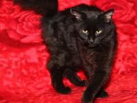Dusk is a beautiful 6-month old female kitty who was