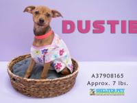 Dusti is a sweet young chihuahua girl looking for a