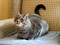 Dusty's story Are you looking for a sweet and sociable