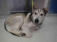 DUSTY's story Dusty was surrendered to the shelter due