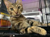 My story I'm at the Pet Valu on Fort Avenue (Locust