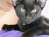 My story Meow! My name is Chucky. I am a 4 month old,