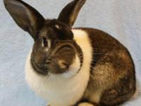 Dutch - Isaac - Small - Adult - Male - Rabbit Hi! I am