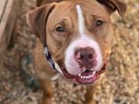 Dutches's story !!! AVAILABLE for Adoption at ACCT