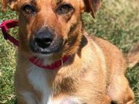 Dutchess's story Dutchess is a sweet girl and loves to