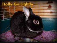 Dwarf - Holly Go Lightly - Small - Young - Female -