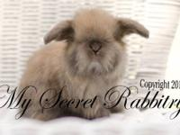 We have some super cute dwarf baby bunnies right now.