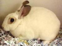 Dwarf - Talia - Small - Young - Female - Rabbit Shelter