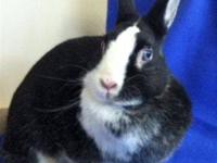 Dwarf - Sammy - Medium - Adult - Female - Rabbit Sammy