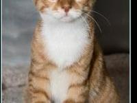DWIGHT's story $97.50 FEE INCLUDES: neutering/spaying,