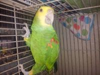 I have a friendly DYH amazon parrot male he talks a