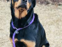 Introducing Dyna! Dyna is a 1 year old female