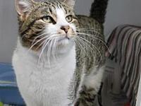 Earl's story 11 pound Neutered HANDSOME fella Earl ~