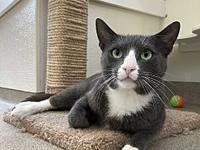 My story Meet Earl! This stunning cat comes with a