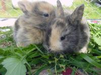 We have a liter of cute baby bunnies ready for Easter.