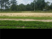 This 187 acre property located 7.5 miles from Eastman,