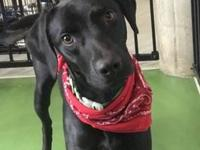 My story Hi! I am a 2 year-old Lab/Retriever mix that