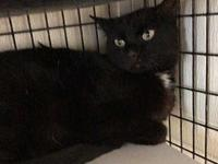Ebony's story PAW Animal Shelter is a high intake No