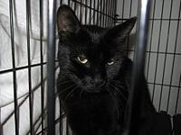 Ebony's story Ebony was a stray girl looking for a good
