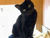 Ebony's story Ebony is a sweet two and a half year old
