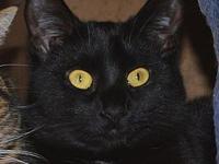 My story Ebony is a beautiful, sleek black kitten with