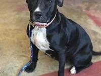 Ebony (GAPR/Fostered in TN)'s story Angels Among Us