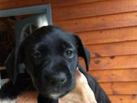 Meet Tippy - one of Ebony's pups born on March 11,