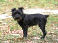 Ebony is a sweet shy girl rescued from PAWS. She has a